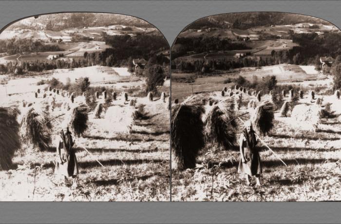A Telemarken Harvest Scene Near Saude