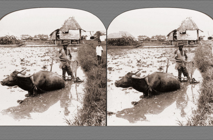 A Filipino Farmer with His Water Buffalo