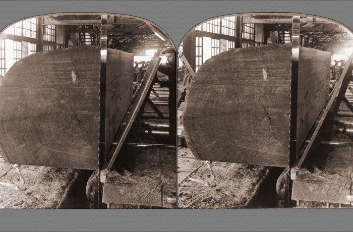 Cutting Huge Redwood Logs