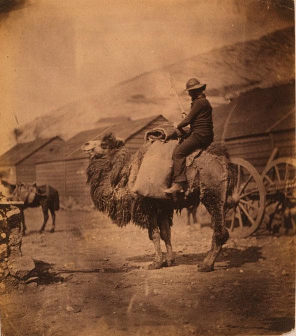 archived-photos-historical-portfolio-calotype-03