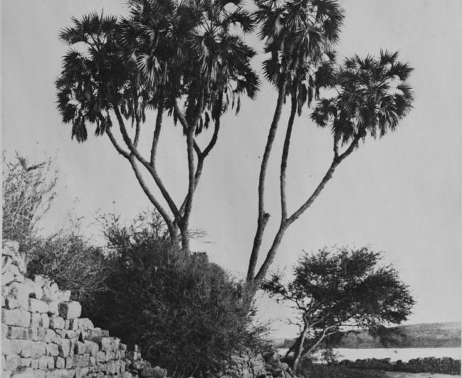 archived-photos-historical-portfolio-calotype-18