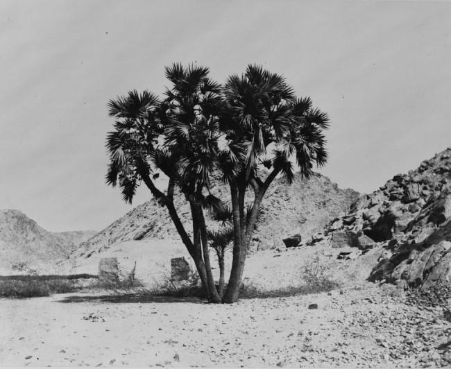 archived-photos-historical-portfolio-calotype-21